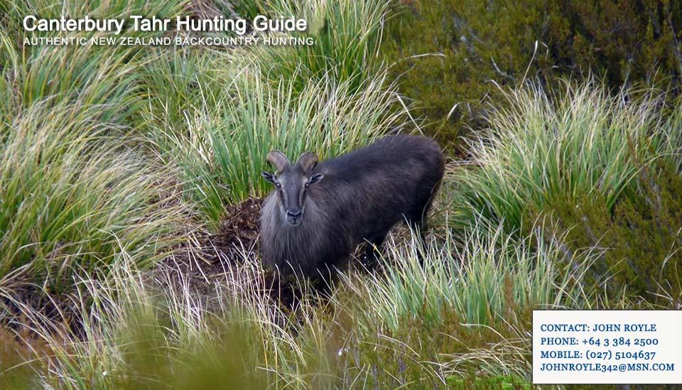 hunting-gallery-nz