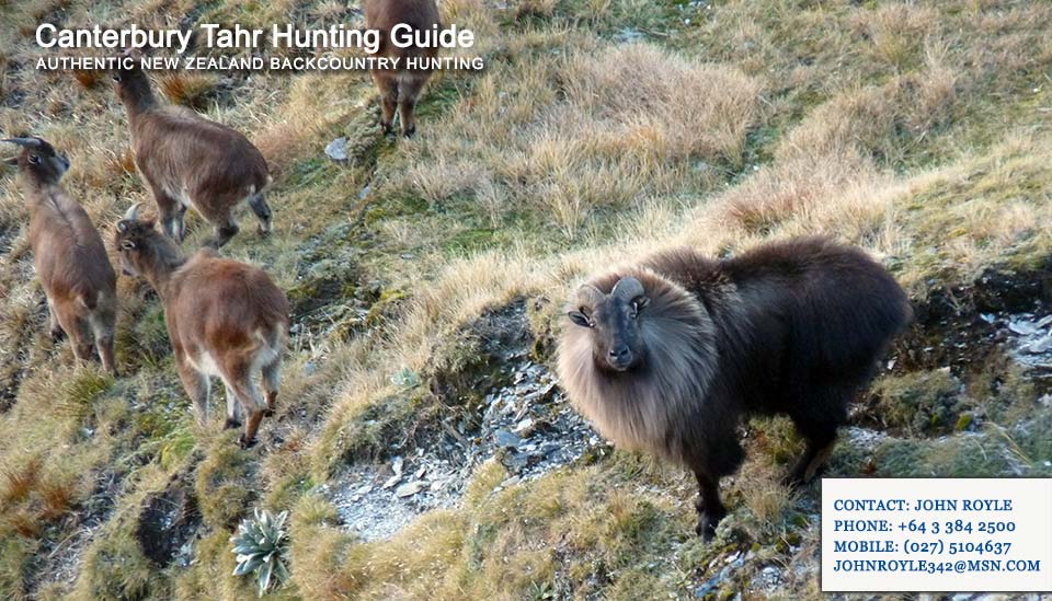tahr-hunting-nz