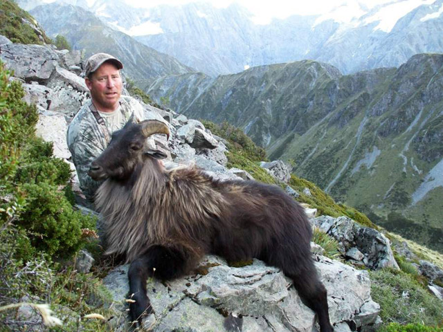 Guided Tahr Hunting In New Zealand Thar Hunting Nz