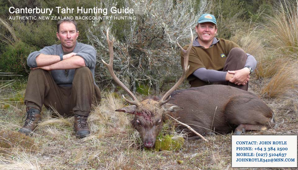sika-deer-hunting-nz