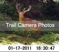Click to view photos from our trail camera
