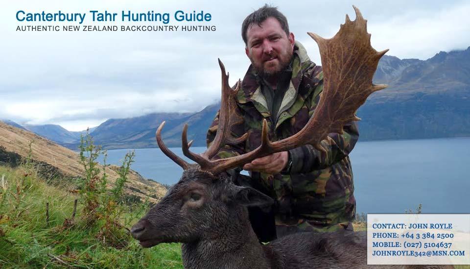 fallow-deer-hunting-nz-guide